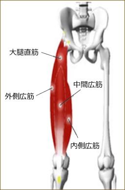 EMS筋肉